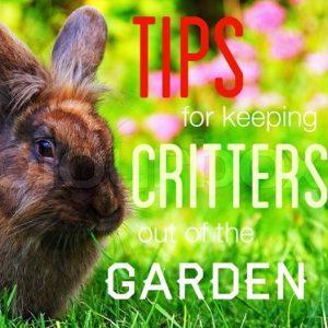 Garden Tips: Keep Critters out of the Garden
